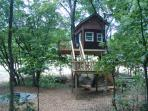 Maple Oak tree house