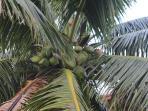 Fresh coconut juice for breakfast