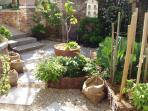 Small potager garden and how productive it has been...