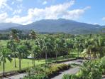 The Caribbean National Rain Forest