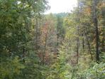 Daniel Boone National Forest -- View from the covered patio beside the Hot Tub