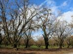 Another view of the orchard on a beautiful day