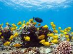 Underwater flora and fauna