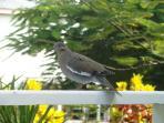 Mayflower Casita birds