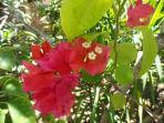 Flowers in bloom at Mayflower Casita