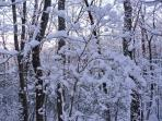 View of woods after good snow
