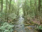 Along the Appalachanand Benton Mackeye Trails