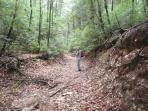 Hiking Trails - 300 miles of them nearby - including the start of the Appalachian Trail