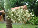 Palmtree flower