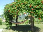 One of the hammocks