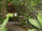 Luscious garden!