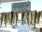 What a catch!!  Thanks to Capt. Jim Bailey .  The best & most experienced Capt.in Key West