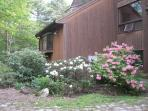 Front of house in early summer