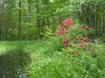 Pond in the springtime
