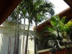 Palm trees in house