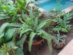 Plants in patio area