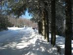 Winter road by trees after 2 foot snowfall - well-plowed roads