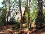 Side view of Green Leaves A-Frame with surrounding karri trees