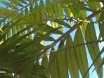 blue sky seen through palm leaves