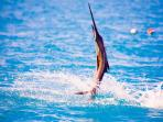Bamboo Fishing Charters offer our guests discounts