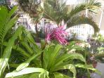 Sea Esta Gardens