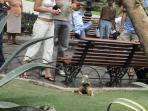 Iguana Park 2