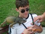 Iguana Park 3