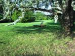 Rest under the cedar tree shade