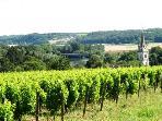 Vineyard Noyers-sur-Cher
