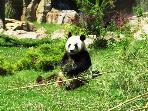 Saint-Aignan ZooParc de Beauval