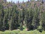 Big Bear Hiking Trails