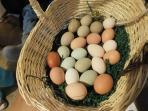 Eggs Fresh from our hens. None of them were dyed.