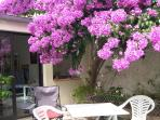 Beautiful Bougainvillea is talking point in the village. We've replaced the furniture.