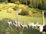 Have fun feeding the fallow deer on the property!