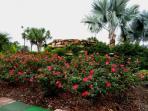 Gardens  Emerald Island Resort