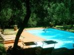 The swimmingpool nestled among olive trees