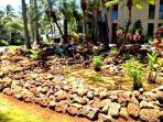 New Koi pond