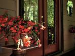 Bonne Chère, Front Door with Christmas Cactus