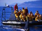Whale watching tours are a short 5 minute drive from our property