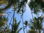 Gorgeous view of sun through palms