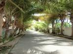 Palm lined streets of Los Corales