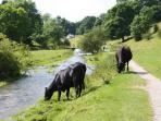 Youlgrave - river Bradford in summer