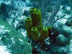 Underwater Sponges