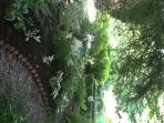 Part of boxwood garden room