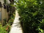 Walkway through the lush garden
