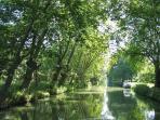 Canal du Midi trees