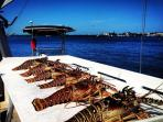Lobster Catch on cleaning station at dock