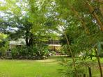 Organic Tropical Gardens with Hummingbirds, Parrots and wild Monkeys running through!