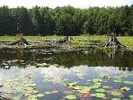 The Bog at Black Moshannon State Park