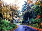 Fall at Black Moshannon State Park